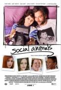 Social Animals(2018)